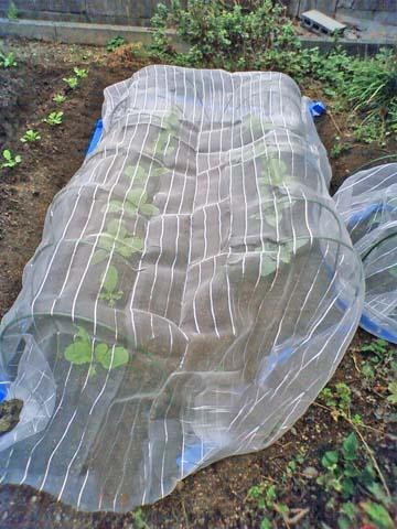 ガーデニング:実家の家庭菜園に設置した防虫用ネット