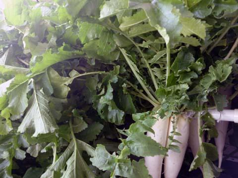 ガーデニング:収穫した大根を風呂場で洗った後ベランダのつっかえ簿に干しました