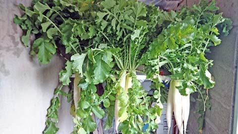 家庭菜園:収穫した大根を干しました