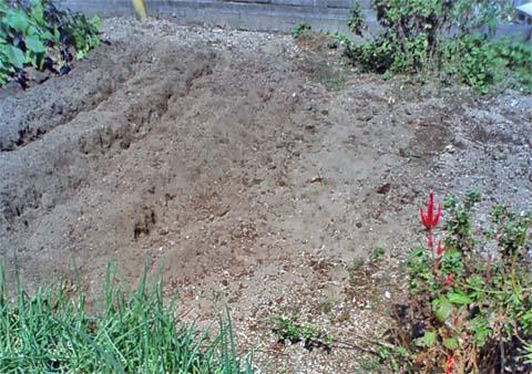 ガーデニング:実家の家庭菜園に大根の種を蒔くために畝作り