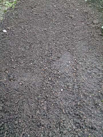 11月3日ほうれん草の種を撒きました