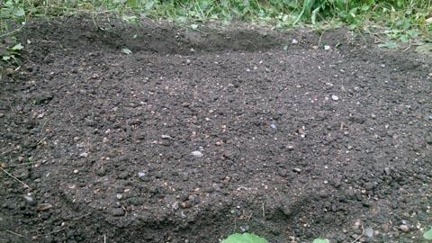 家庭菜園にほうれん草の種を撒きました